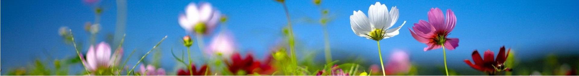 Flores de primavera y verano