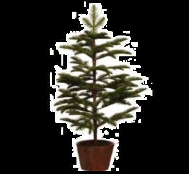 Abeto Spruce Navidad 92cm