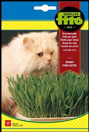 Hierba para gatos - Semillas Fitó