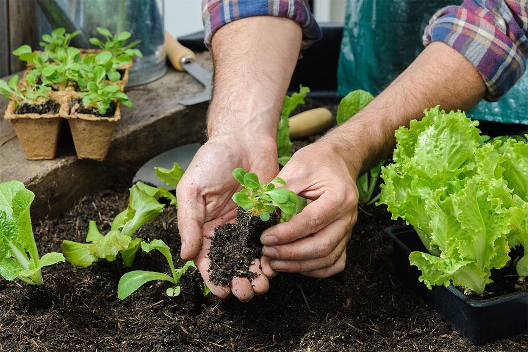 ¿Cómo crear un huerto de plantas y semillas en Otoño?
